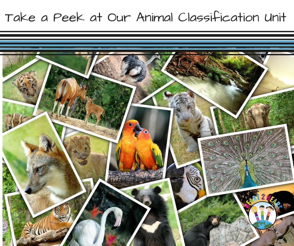 Take a Sneak Peek at Our Animal Classification Unit