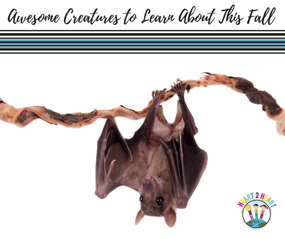 4 Awesomely Creepy Creatures to Learn About This Fall