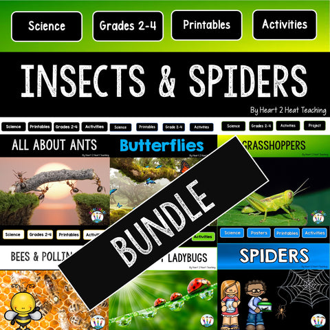 Insects and Spiders lessons for kids