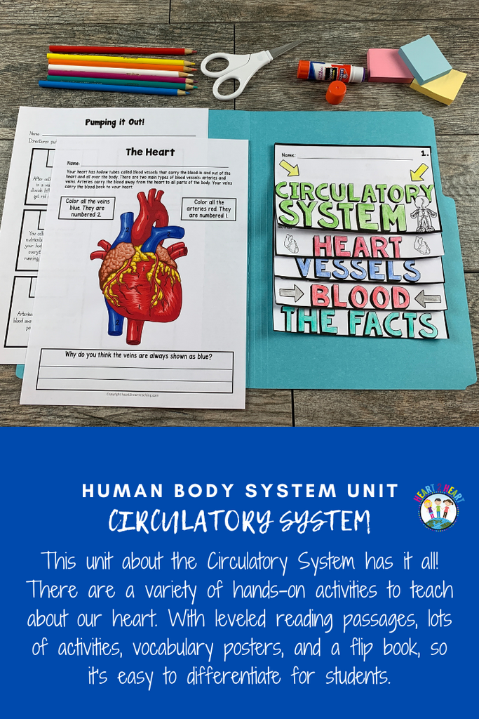 Human Body Systems: Let's Explore Our Circulatory System