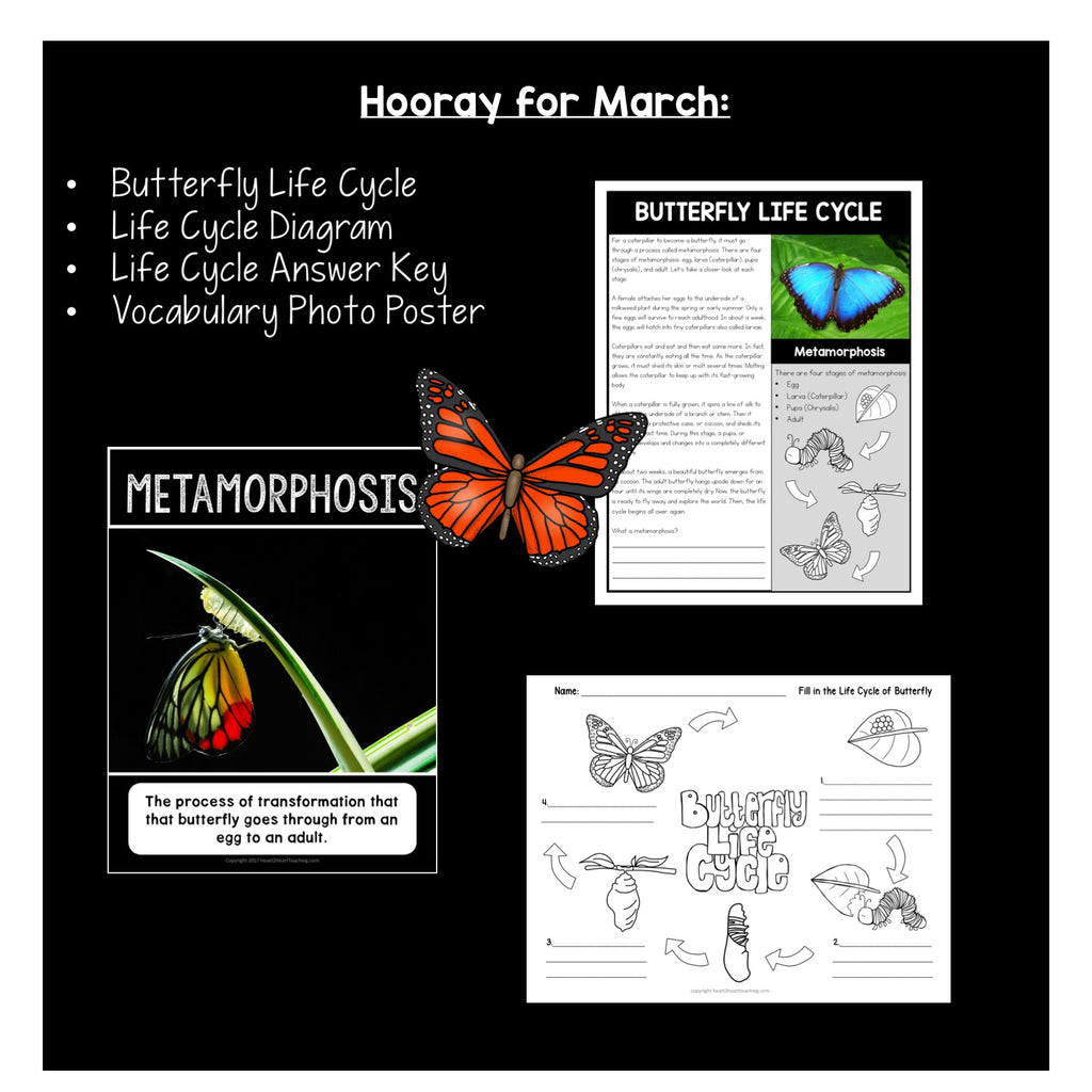 The Life Cycle of a Butterfly Activity Freebie for Kids