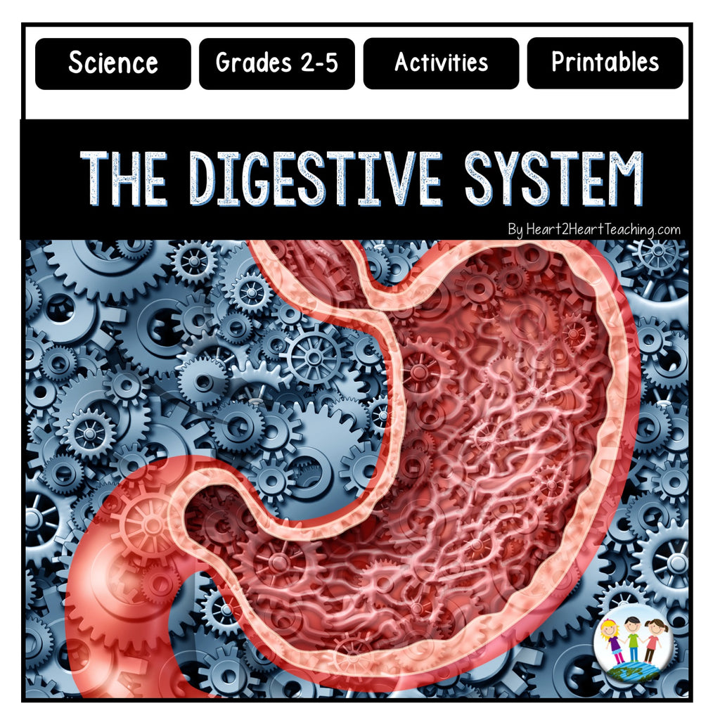 Human Body Systems: Let's Explore our Digestive System