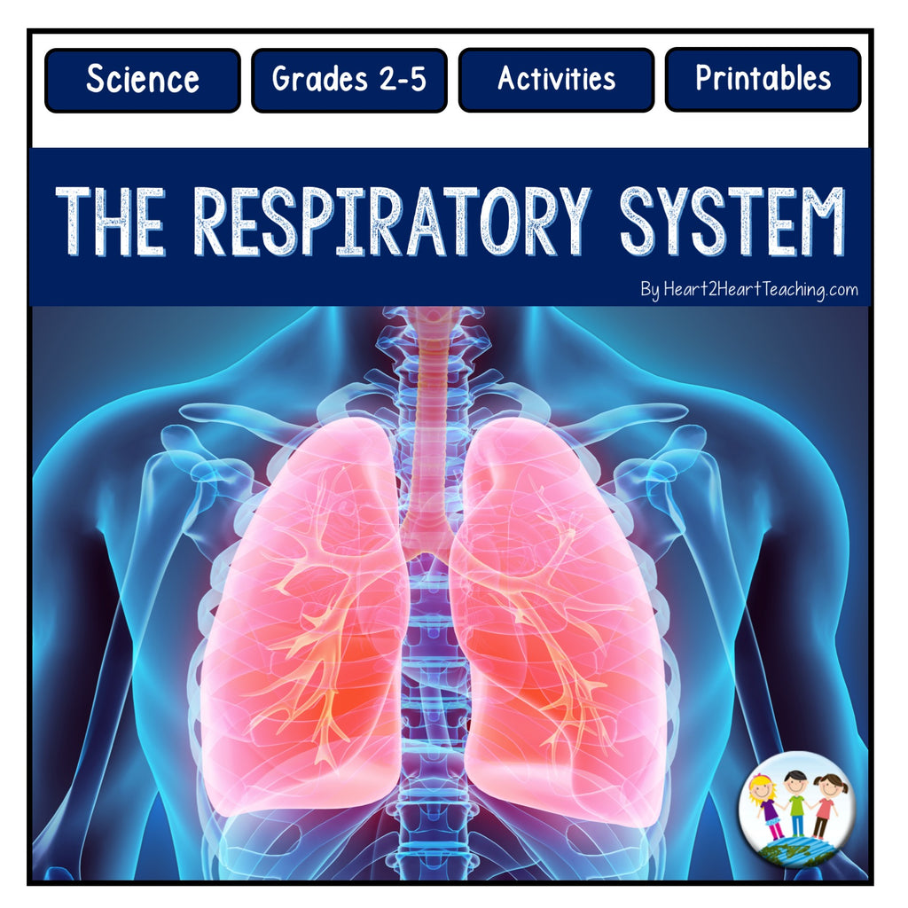 Human Body Systems: Let's Explore our Respiratory System