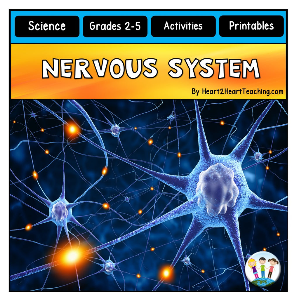 Human Body System: Let's Explore our Nervous System