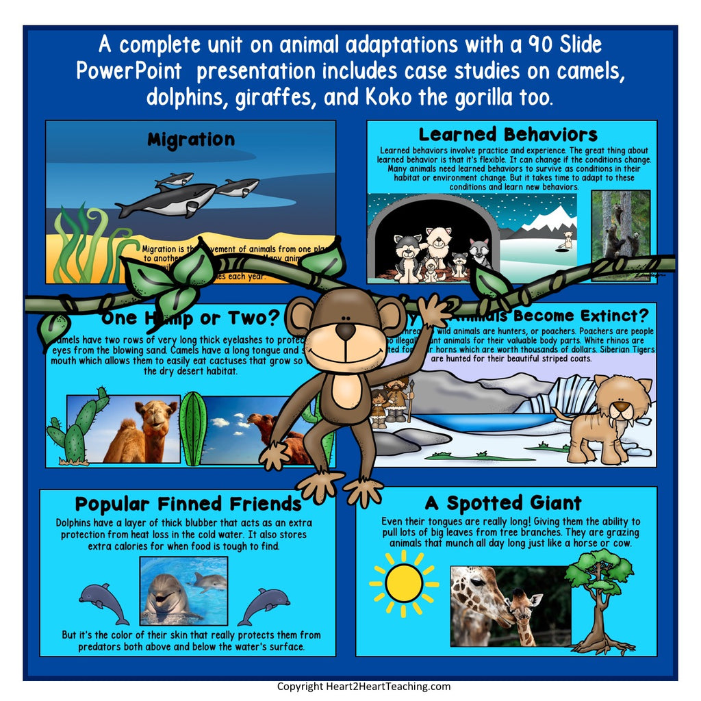 Animal Adaptions Powerpoint