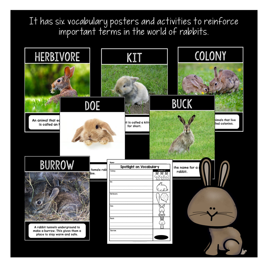 The Life Cycle of a Rabbit Activity Pack