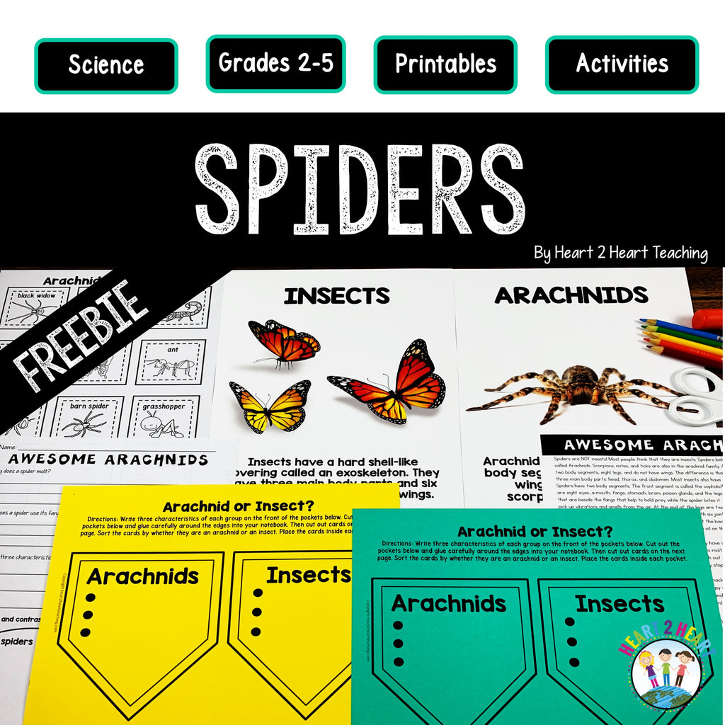 Spider Activity Freebie