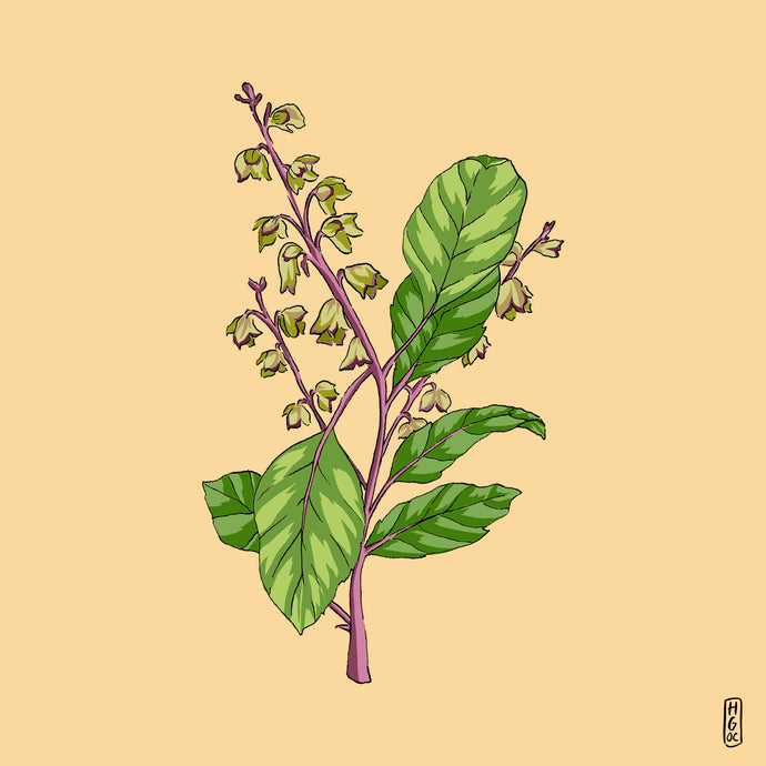 Tulsi: A herb to build resilience