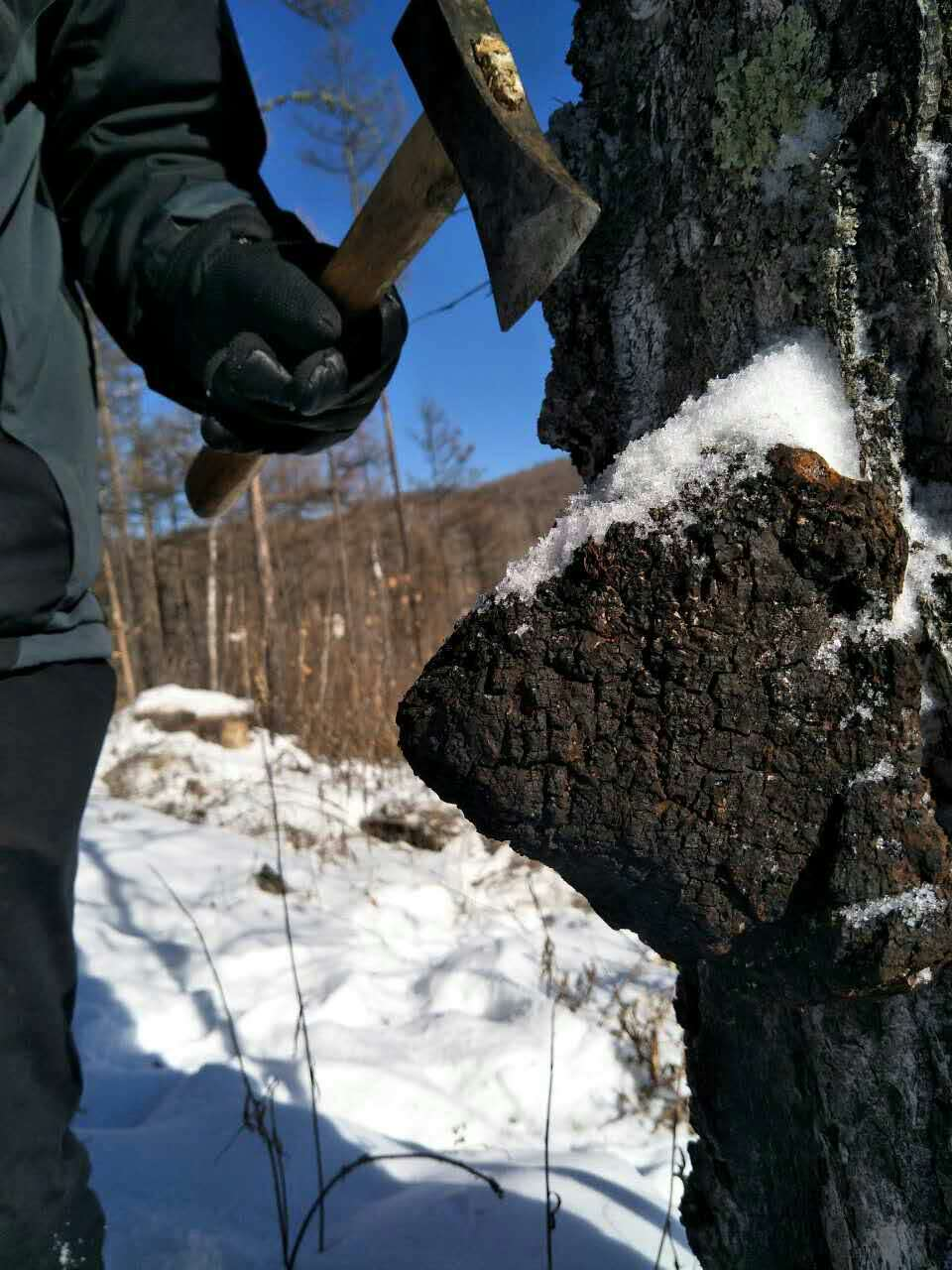 Wunder Workshop Wild Harvested Chaga