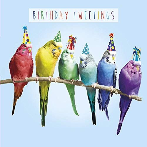 Birthday Tweetings Greeting Card Lenticular 3D