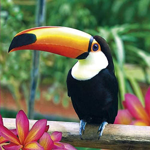 Toucan Blank Greeting Card Lenticular 3D
