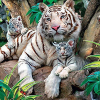 White Tigers Blank Greeting Card Lenticular 3D