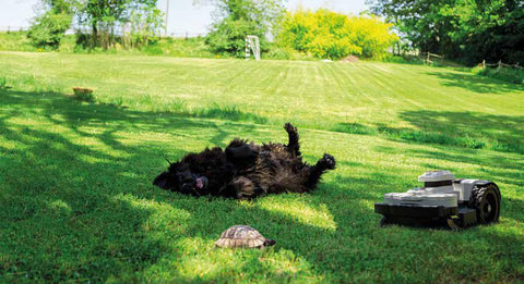 dog with robot on grass-Guide to buying a robotic lawn mower