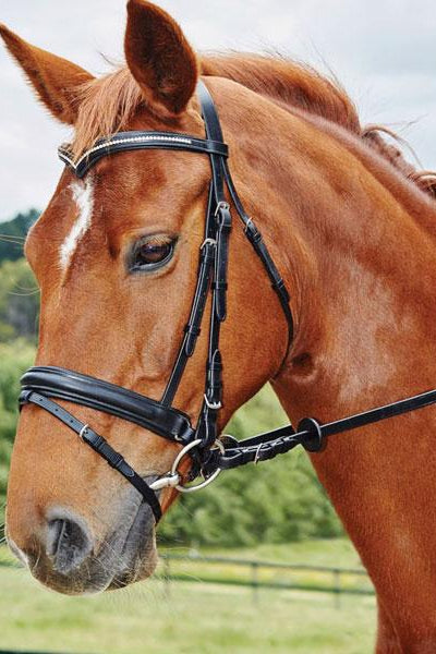 Kincade Deep V Crystal Hanoverian Bridle