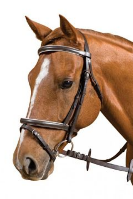 Saddle Craft Hano bridle