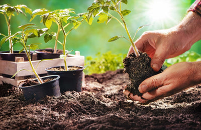 Ultimate Soil Preparation Guide for Beginners