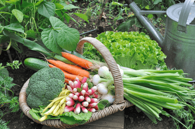 How to start growing your own fruit and vegetables 🥕