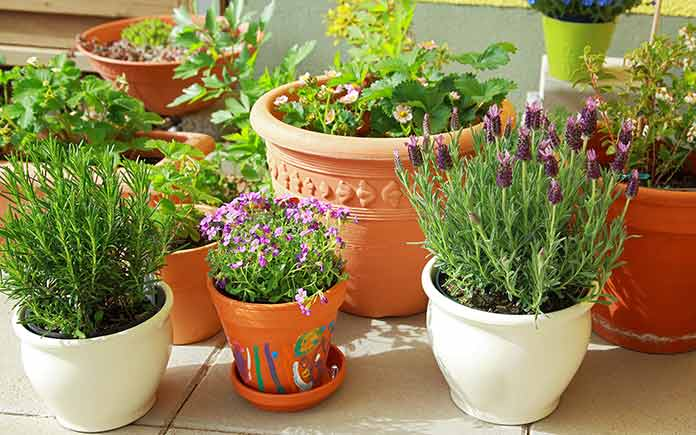 container gardening different kinds of pots