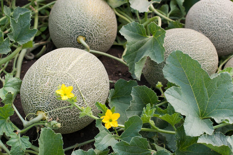 best crops fruits veggies for spring
