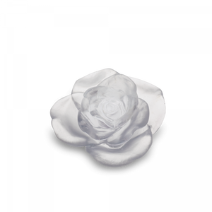 White flower Rose Passion