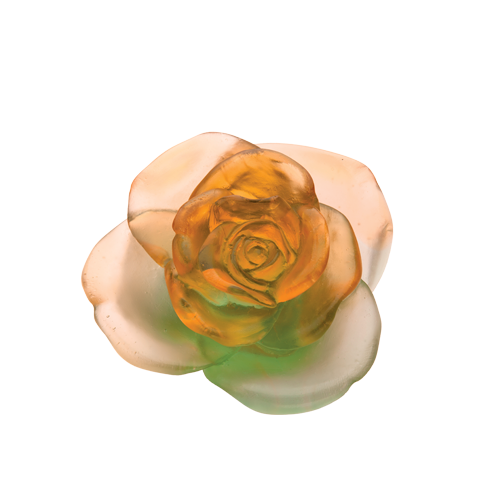 Green & orange flower Rose Passion
