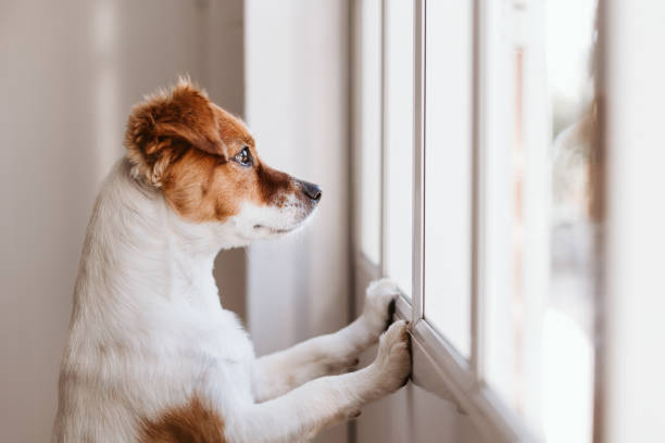4 Tips for helping your pet adjust to the easing of Lockdown