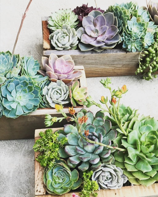 Wood Centerpiece Workshop: Tuesday, May 11th 5:30- 6:30pm with Prickly Pear Farms
