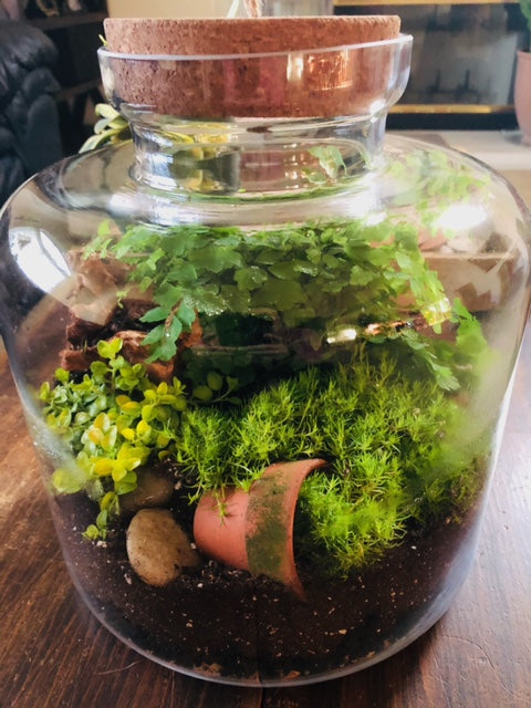 Enclosed (Bring Your Own) Terrarium Workshop - Saturday, February 27th 5:30 - 6:30pm with Prickly Pear Farms