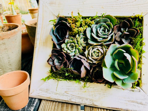 Valentine Succulent Wreath: Thursday, January 30th 5:30 - 6:30pm by Prickly Pear Farms