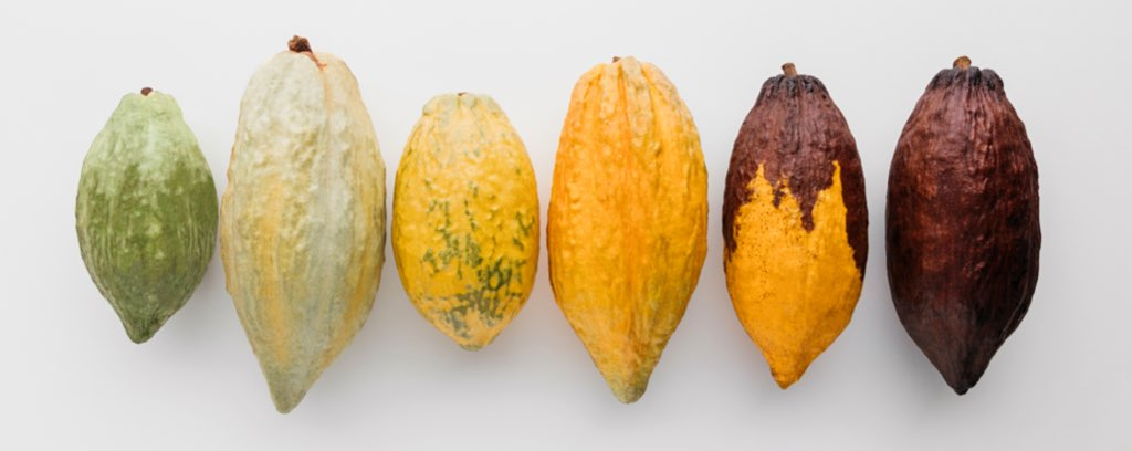 Cacao Varieties