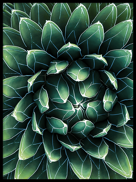 Agave Wall Art Print - PRRRINT