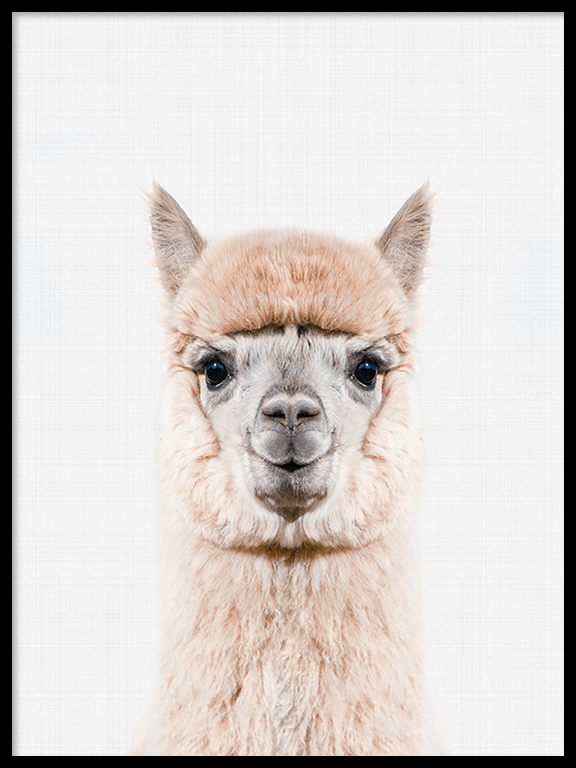 Alpaca Wall Art Print - PRRRINT