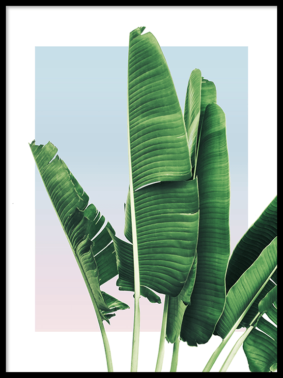 Banana Leaves in Sunset Wall Art Print - PRRRINT