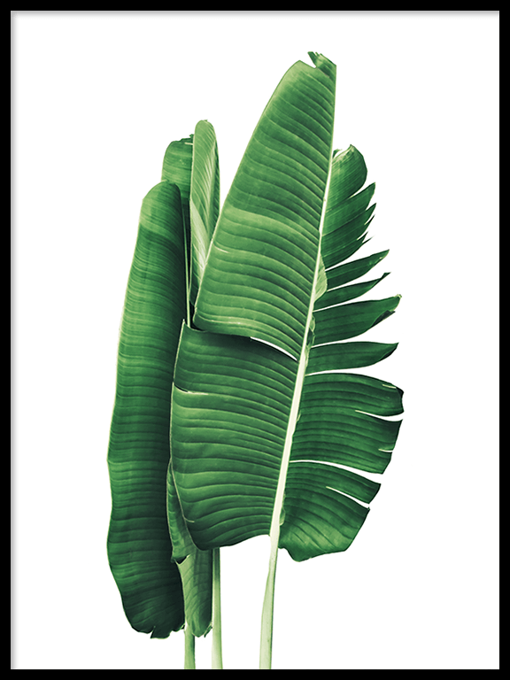 Banana Leaves No2 Wall Art Print - PRRRINT