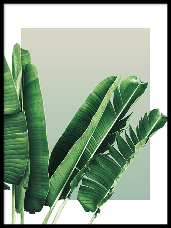 Banana Leaves No3 Wall Art in Olive - PRRRINT