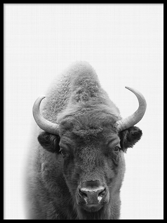 Buffalo Wall Art Print - PRRRINT