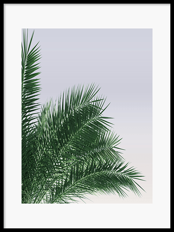 Calm Palm Leaves No2 Wall Art Print - PRRRINT