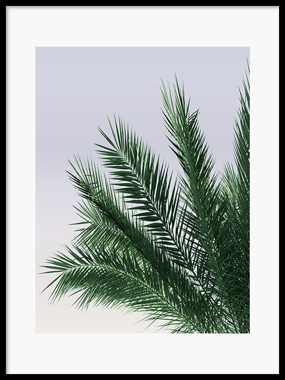 Calm Palm Leaves Wall Art Print - PRRRINT