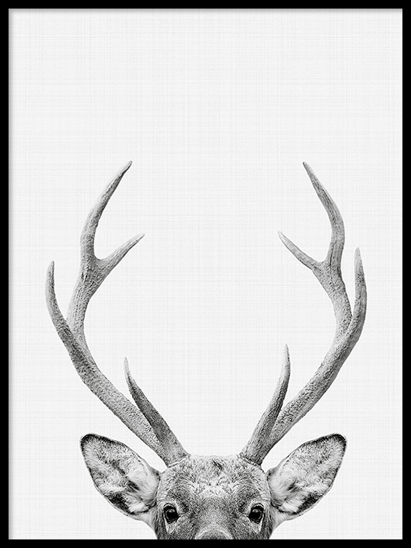 Deer Photo Wall Art Print in Black and White - PRRRINT