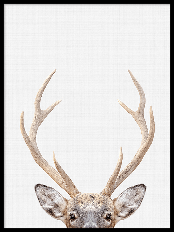 Deer Photo Wall Art Print - PRRRINT