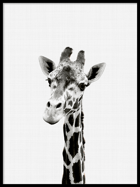 Giraffe Wall Art Print in Black and White - PRRRINT
