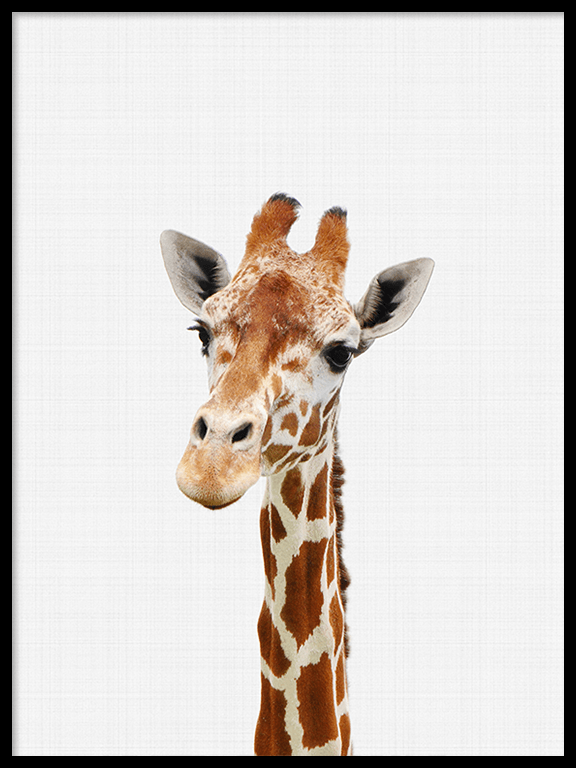 Giraffe Wall Art Print - PRRRINT