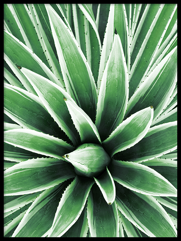 Green Agave Botanical Wall Art Print - PRRRINT