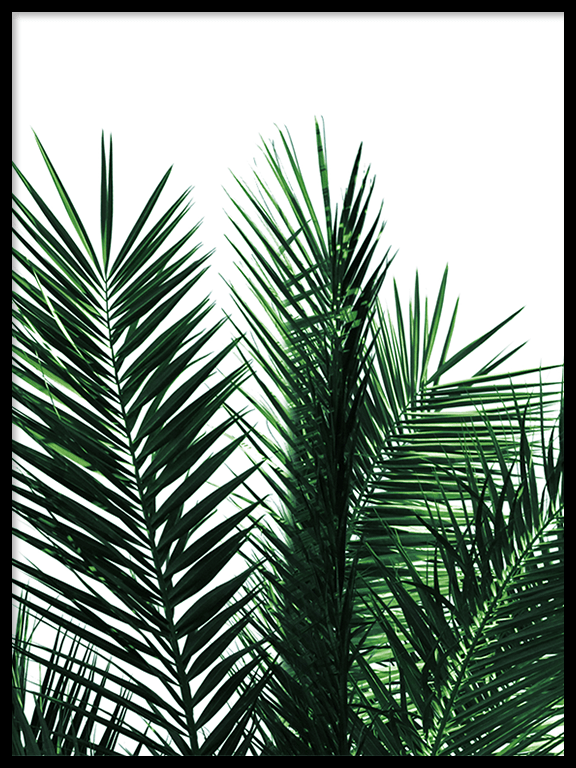 Green Palm Leaves No2 Print - PRRRINT