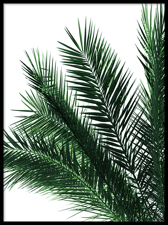 Green Palm Leaves Print - PRRRINT