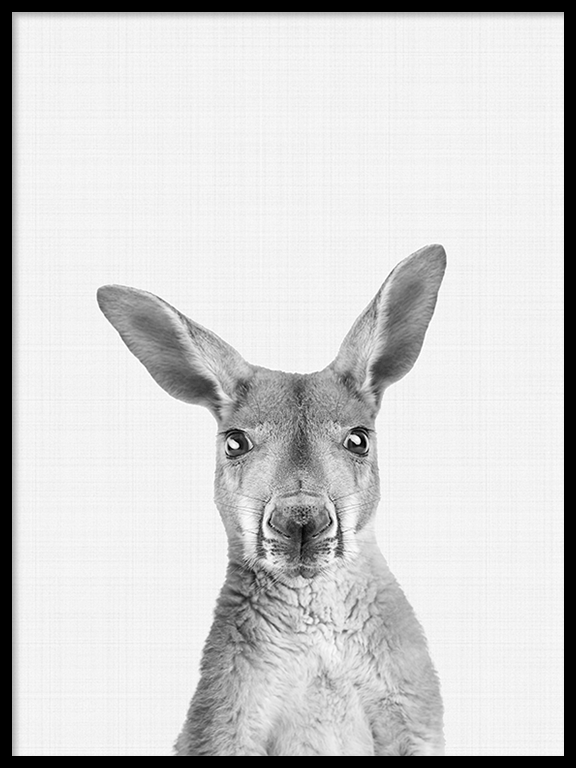 Kangaroo Photo Art Print in Black and White - PRRRINT