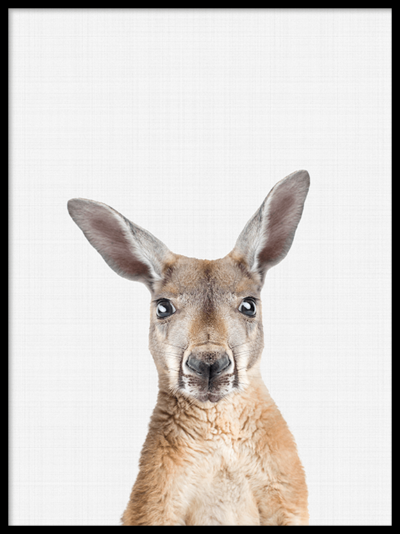 Kangaroo Photo Art Print - PRRRINT