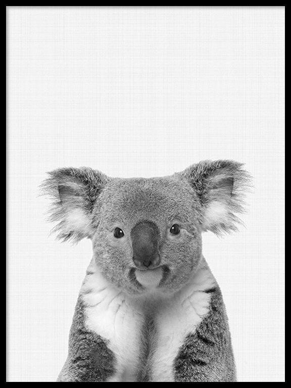 Koala Photo Art Print in Black and White - PRRRINT
