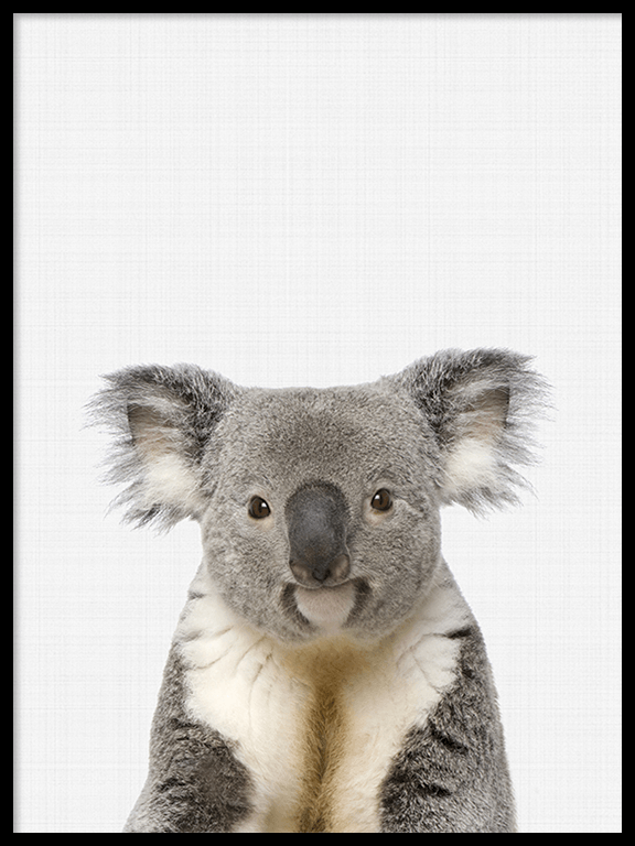 Koala Photo Wall Art - PRRRINT