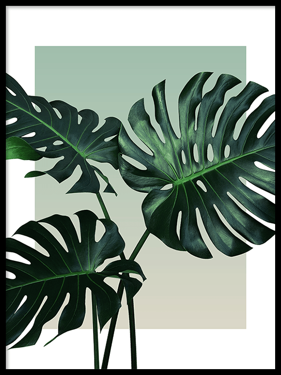Olive Monstera Leaf No4 Wall Art Print - PRRRINT